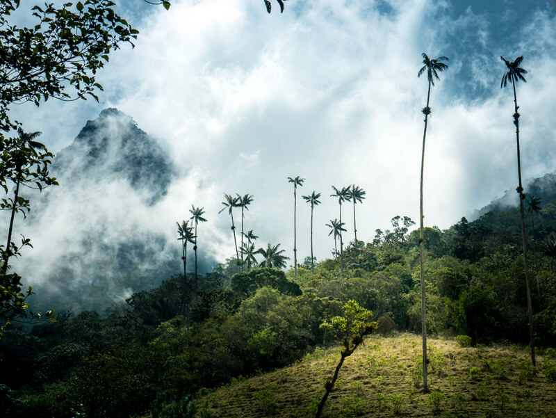 Trekking around the Cocora Valley in Salento is one of the most popular activities in Colombia