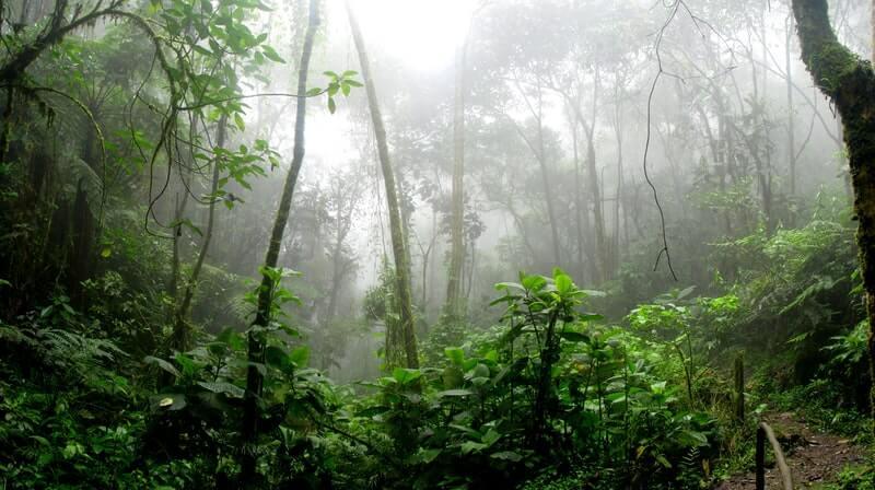 The amazon is a foggy rainforest