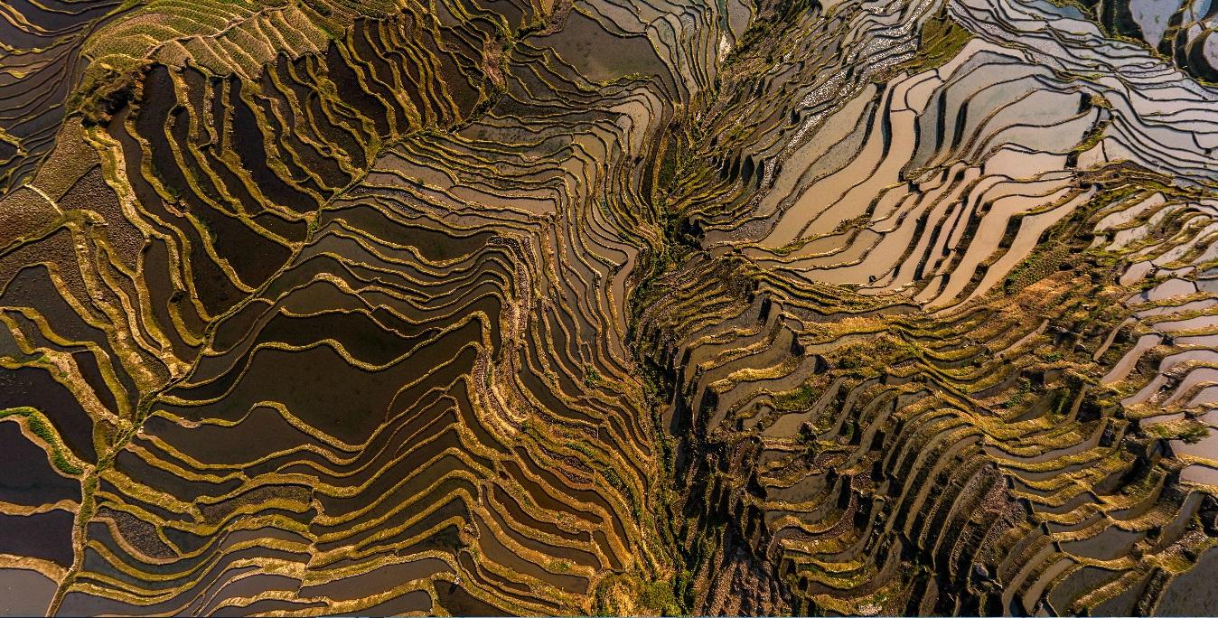 Yuanyang Hani Rice Terraces, China