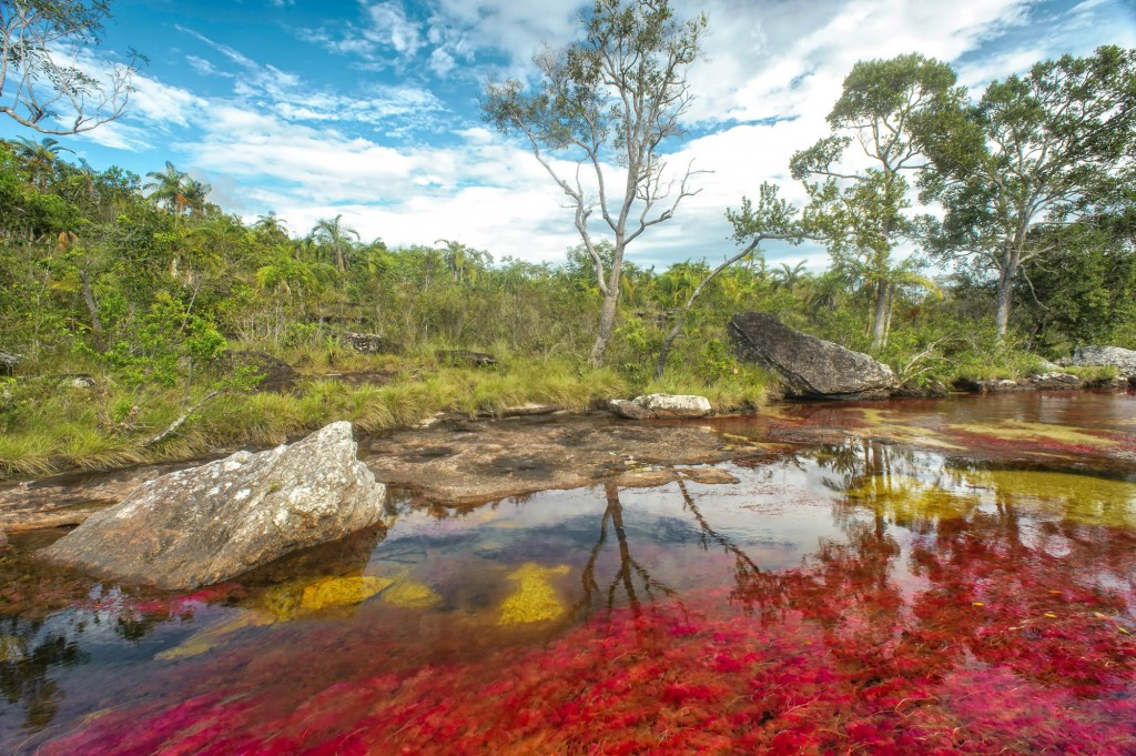 While visiting Cano Cristales you can see a lot of biodiversity in the whole area - how to get to cano cristales