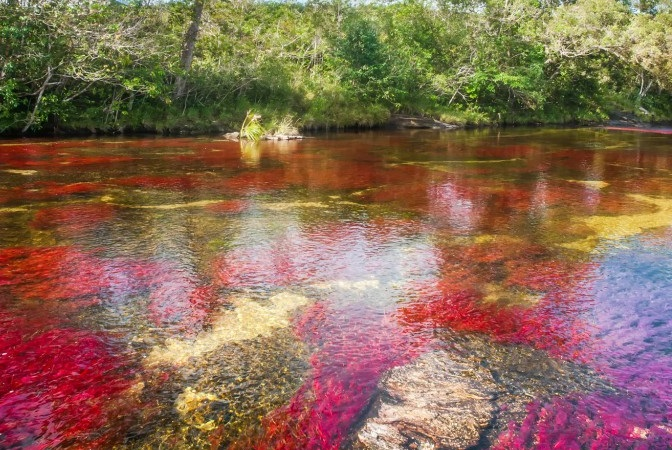 Swimming in Cano Cristales is only allowed in several parts of the river