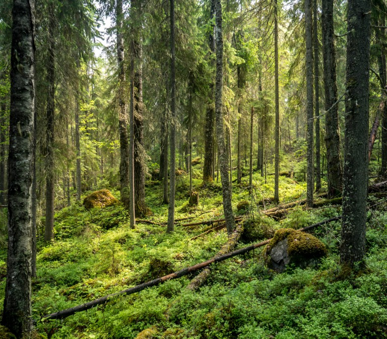 Finland National Park