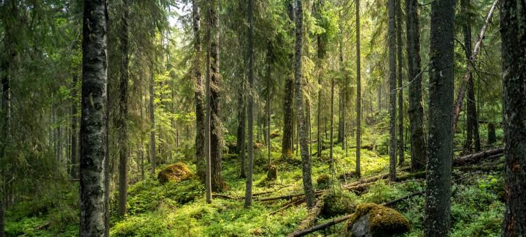 Kuopio 10
