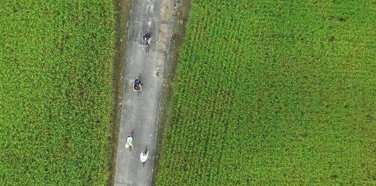 Roads between rice fields in western Taiwan