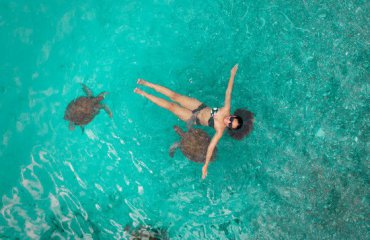 Drone photography swimming with turtles