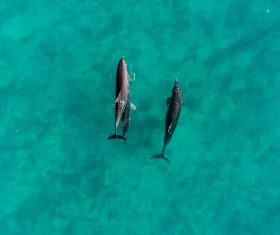 Andros-Bahamas-Dolphins
