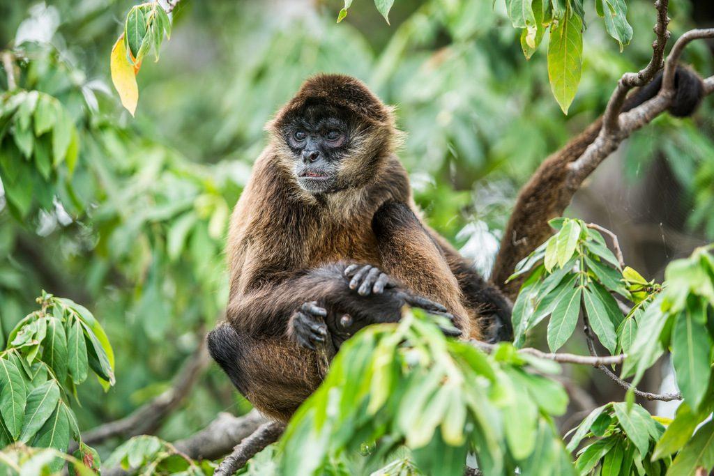 Fauna found at the dormant Mombacho volcano