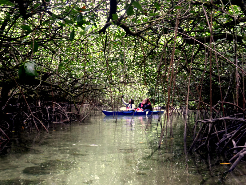 Kayaking in a mangrove forest in Palau