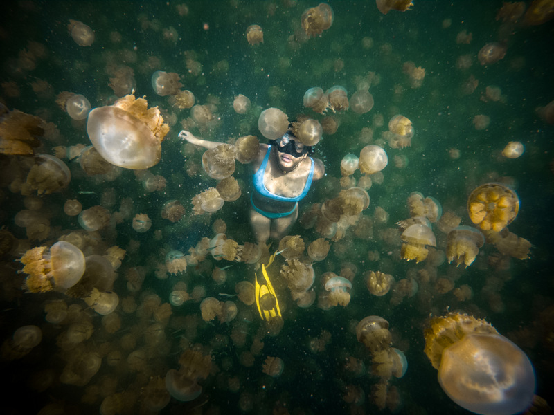 Person swimming at the jellyfish lake in Palau