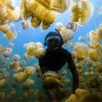 Swimming at the jellyfish lake in Palau