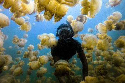 Swimming at the jellyfish lake in Palau