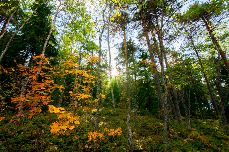 Autumm colors turned the forests of Saimaa into fairytale locations - Road trip in Saimaa