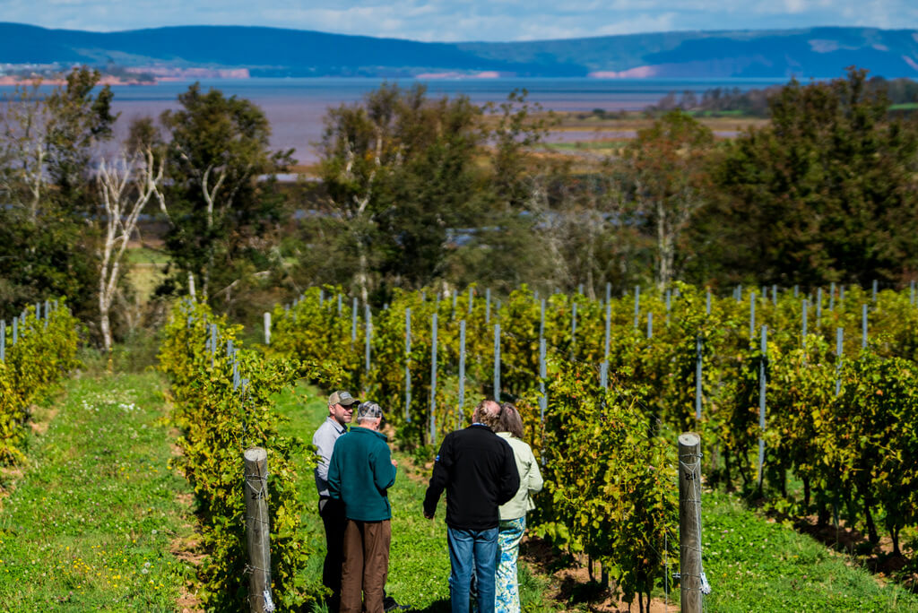 Nova Scotia is growing up as a wine destination in North America