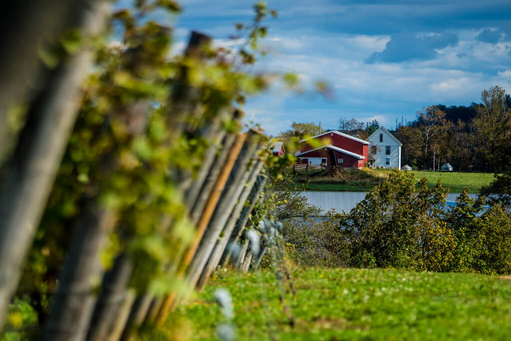 Tidal Bay is thethe first wine appellation for Nova Scotia. It displays the unique characteristics of the region with a crisp taste and aromatic aroma.