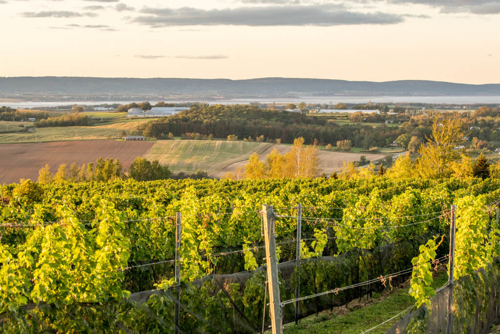 View over the Annapolis Valley in Nova Scotia - Wine is being affected by climate change