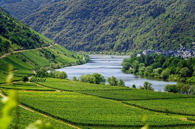Effects of climate change in wine - Wine area of Mosel in Germany