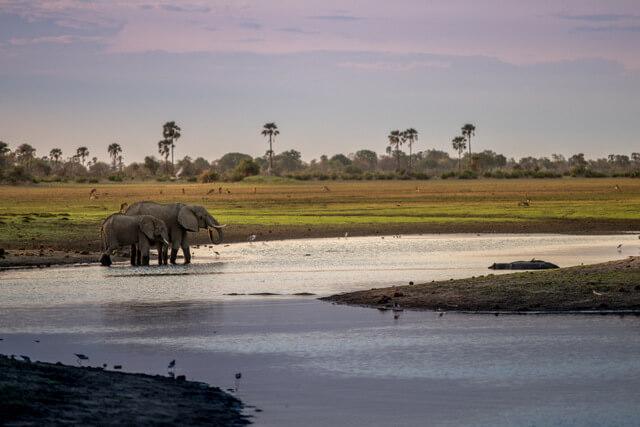 Nxabega Camp in the Okavango Delta, Botswana - Elephants taking a bath