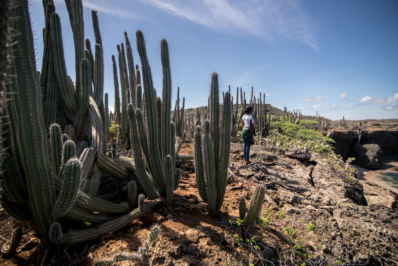 Boka Charomba cactus forest in Curaçao