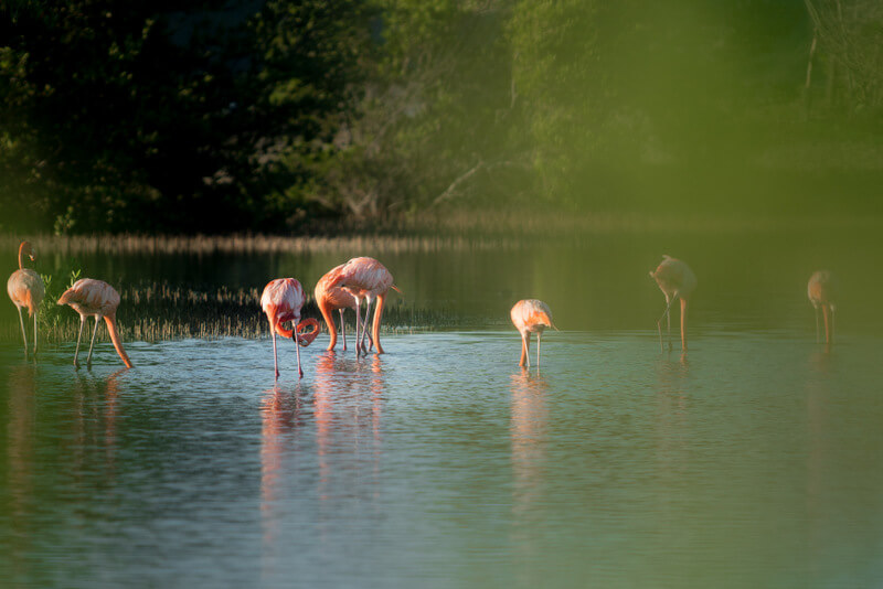 Spotting flamingos after the sunrise at Curaçao salt flats
