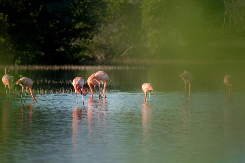 Spotting flamingos after the sunrise at Curaçao salt flats