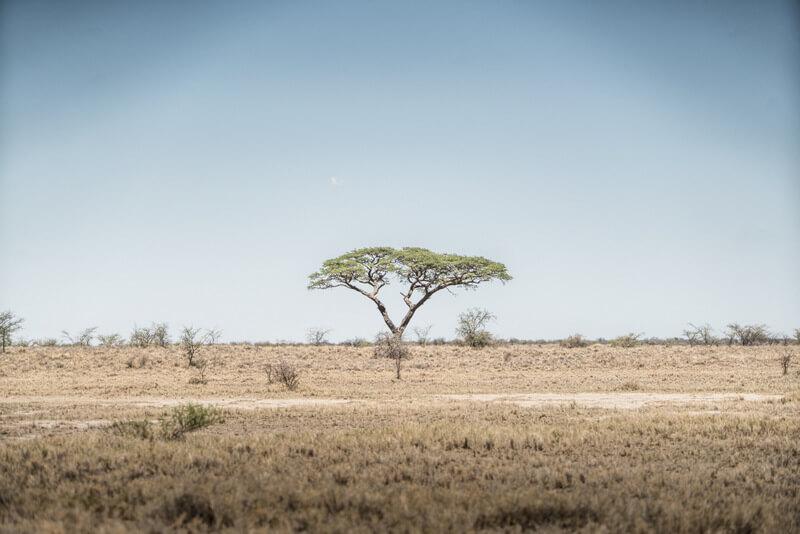 Flat savannas surrounding the pans