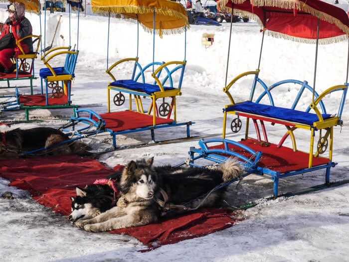 Sled dogs at the frozen Songhuajiang river in Harbin