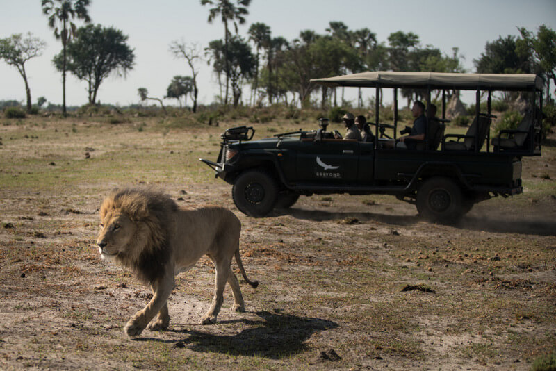 Game drives at the Nxabega Tented Camp were private and personal