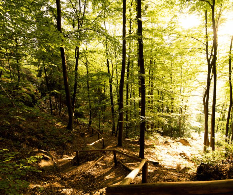 Hiking trail to the Schrammsteine