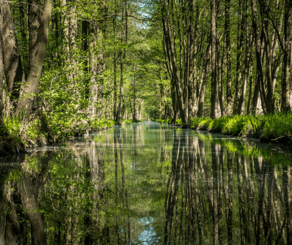 Canals surrounded by forest at Spreewald