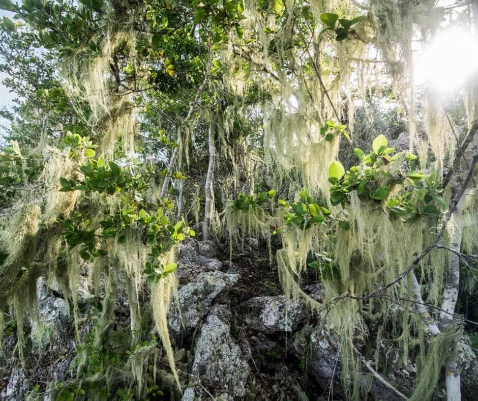 Christoffel National Park- vegetation
