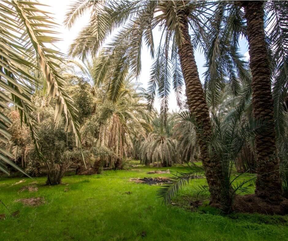 Bahariya Oasis - Egypt-White-&-Black-Desert