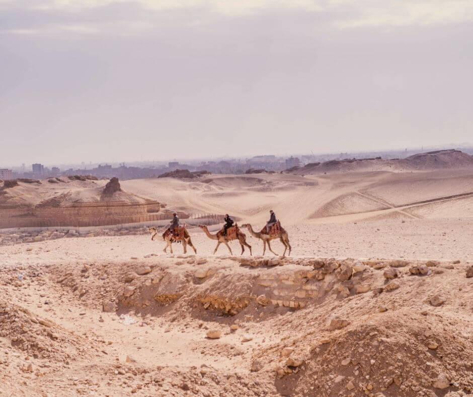 Camel rides in Giza