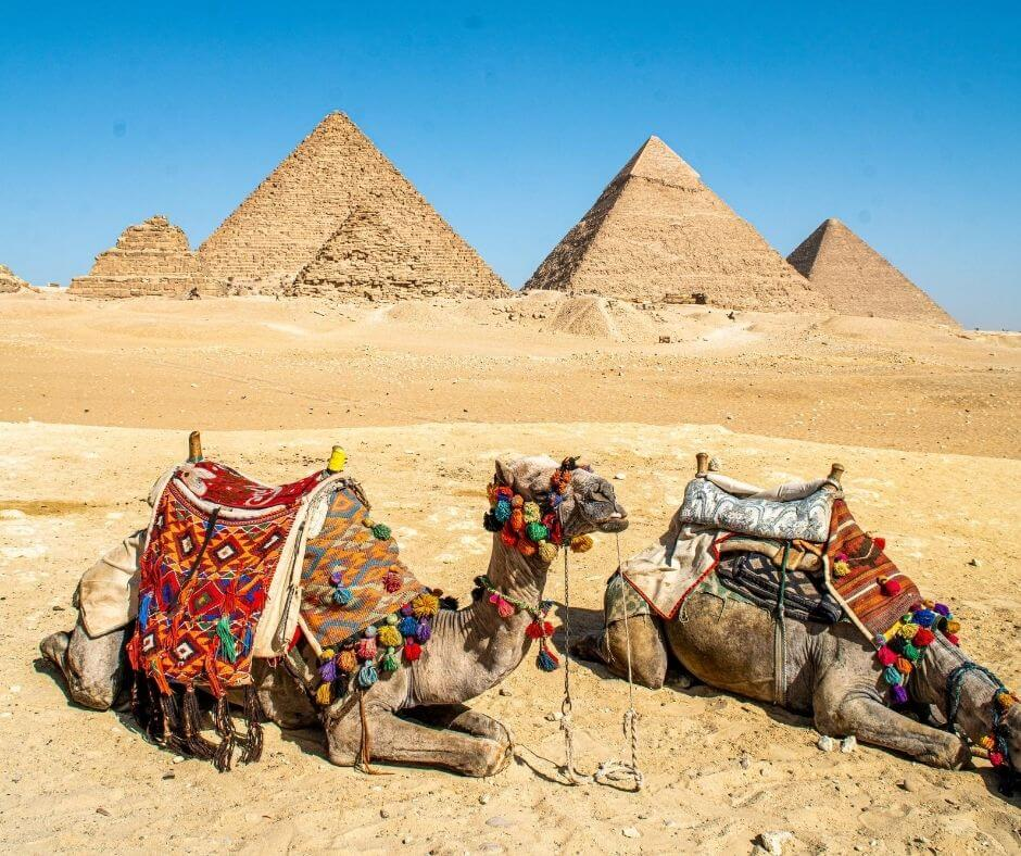 Camels resting in the southert part of the GIza complex