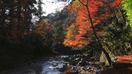 Hiking Mt. Takao and Mitake