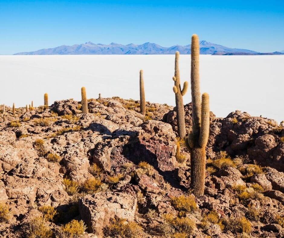 Isla Incahuasi Salt Flats Bolivia