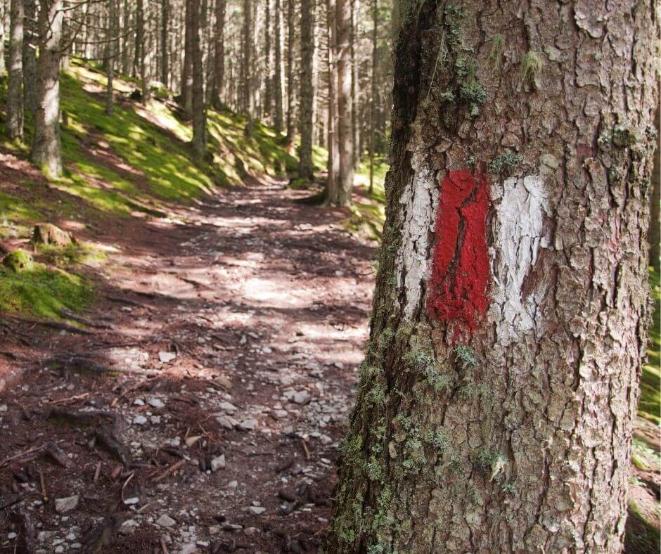 Hiking Signs on a tree in the AustrianAlps