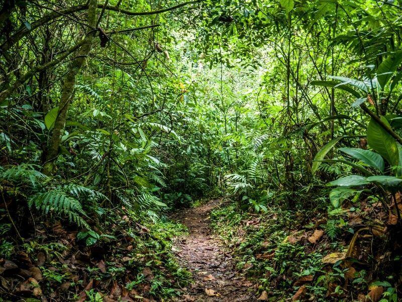 Trekking areas in the Honduran jungle