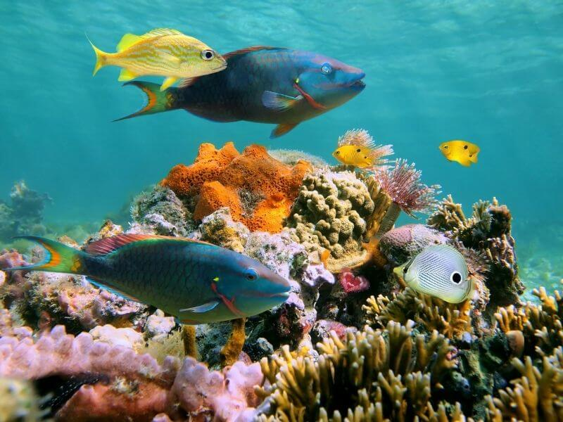 Snorkeling in Isla Mujeres can also bring very nice suprises